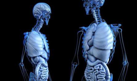 7 мифов о человеческом теле, которые многие принимают за факты