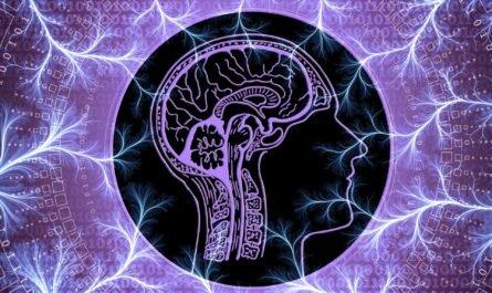Популярные заблуждения о нервной системе