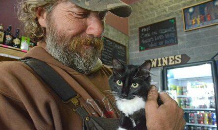Бездомный вернул пропавшего кота, отказавшись от вознаграждения, но теперь у него есть дом и работа