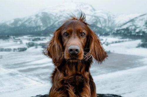 Старец сказал, что обрел мудрость благодаря собаке