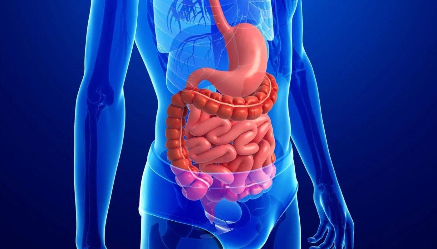 10 удивительных фактов о кишечнике