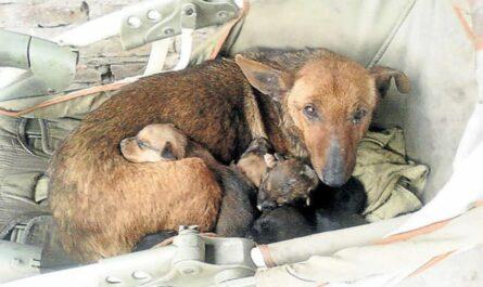 В Аргентине бездомная собака всю ночь согревала ребенка, которого мать бросила на улице