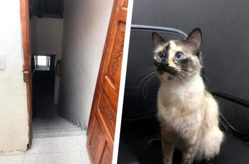 Колумбийский кот спас малыша, который чуть не упал с лестницы