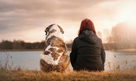 Девушка приютила старую собаку, которая спасла ее от грабителей