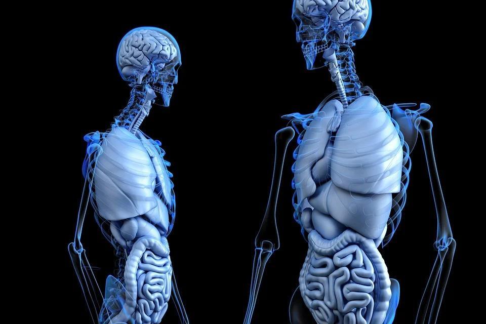 25 интересных фактов о легких, которые вы могли не знать