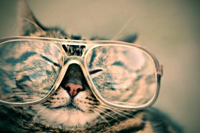 10 научно обоснованных причин завести котенка