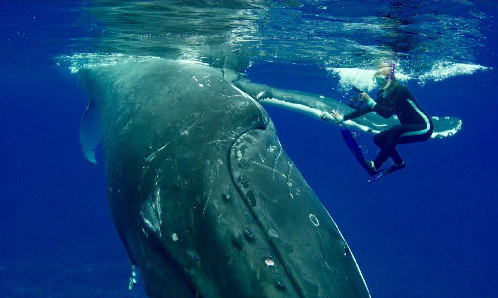 Невероятные истории о диких животных, которые спасли людей