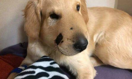 Лучший друг: пять историй о собаках, которые спасли людей