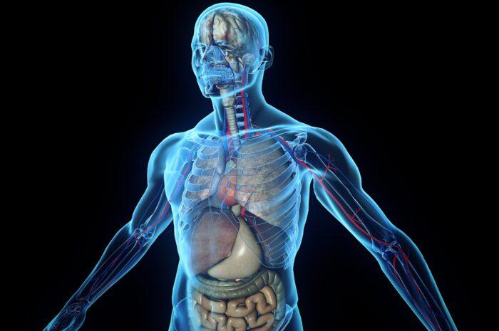 15 интересных фактов об организме человека