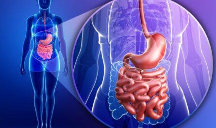 О развитии пищеварительной системы