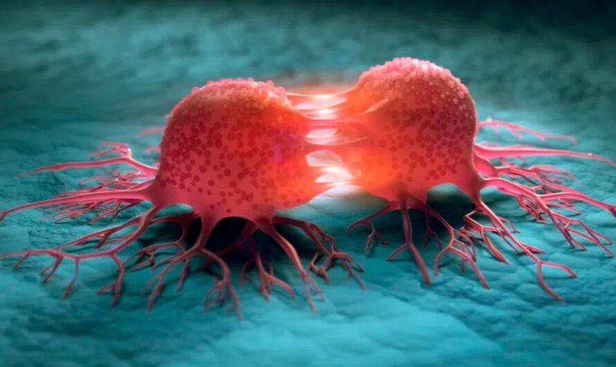 30 полезных фактов о раке
