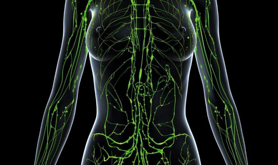 15 интересных фактов о лимфатической системе человека