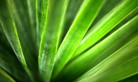 19 интересных фактов о хлоропласте